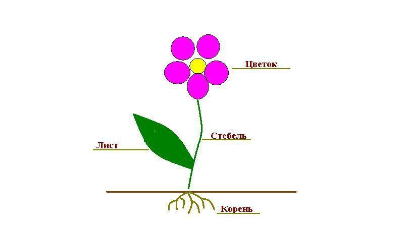 Image result for картинка для детей строение цветка
