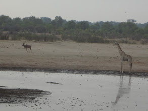 Photo: Kudu, crocodile, and giraffe