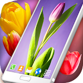 Tulips Live Wallpaper