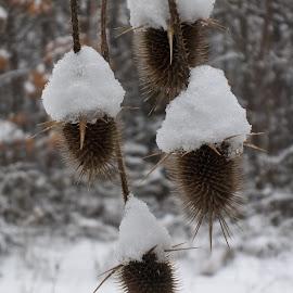 Зима by Georgi Kolev - Nature Up Close Other plants ( сняг., гора., зима., храсти., тишина. )