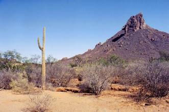 Photo: Désert du Sonora au Mexique