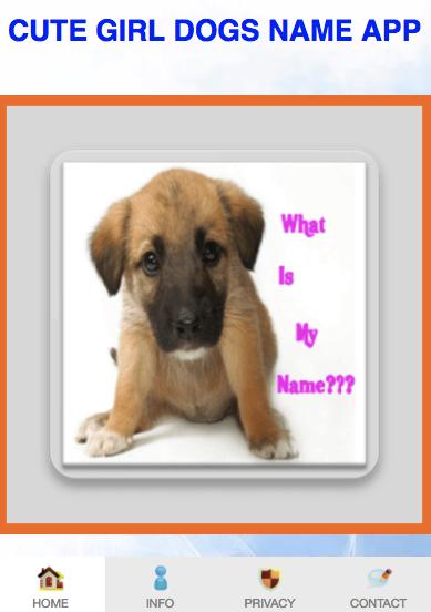 Unique Name For A Boy Dog