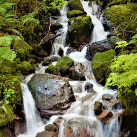 Mt.Loop Hwy by Lavonne Ripley - Nature Up Close Water