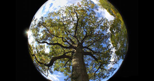 Mother-Earth-1.jpg