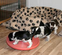 Photo: aber Toffie greift ein und lenkt Ellie ab