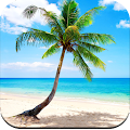 Palm Tree Wallpaper HD APK