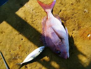 Photo: 真鯛と・・・アジゴ。 なんで?!