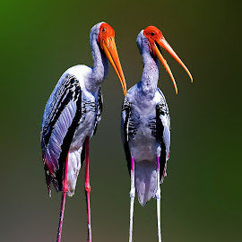 by Kuntal D - Animals Birds