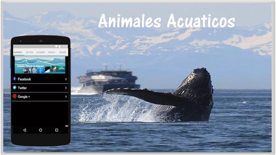 Animales Marinos en Imagenes - náhled