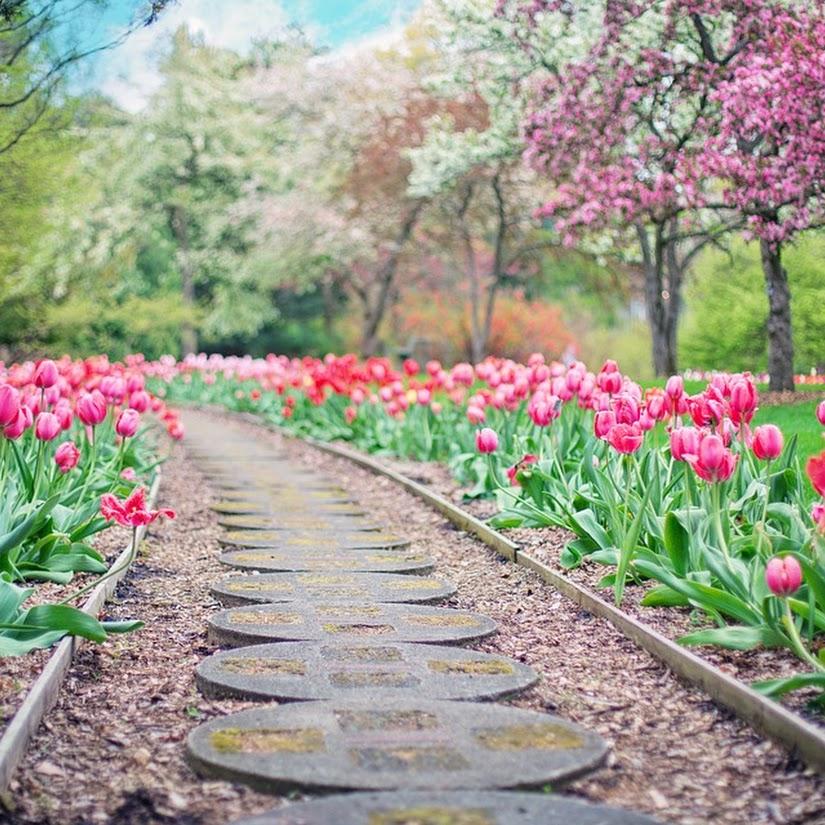 6 consejos para un jardín 10