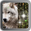 Wild Wolf HD live wallpaper icon
