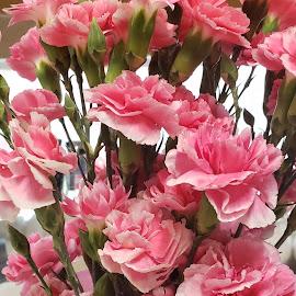 by Jennifer Smith-Turner - Flowers Flower Arangements