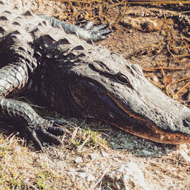 snapped quick by Stephen Lang - Animals Reptiles