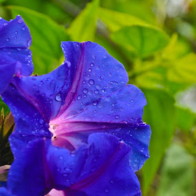 Blue  by Eb Jai - Nature Up Close Flowers - 2011-2013