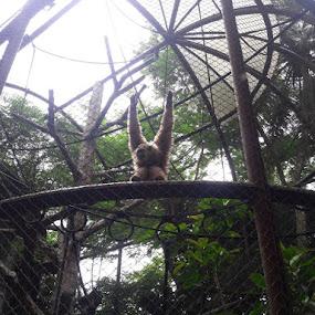 11 by Esterlin Wau - Animals Other Mammals ( mammals, animals, monkey )