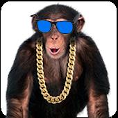 Amazing Monkey