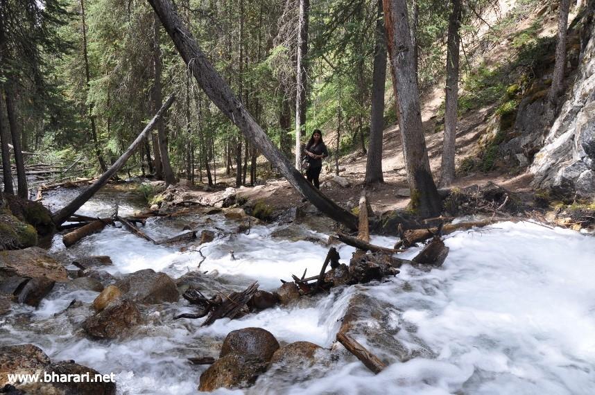 The creek at the base of Silverton Falls