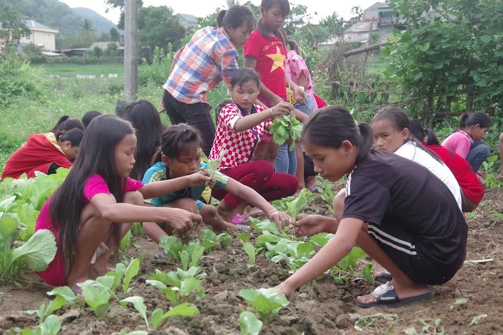 Ngoài giờ học, học sinh Trường PTDTBT THCS Hữu Kiệm, huyện Kỳ Sơn tham gia trồng rau, chủ động nguồn rau sạch cho các bữa ăn bán trú tại trường