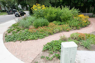 Photo: Anderson Parkette was created in collaboration with Oakville Horticulture Society and the Town of Oakville to show folks how stunning a #biodiversity garden could be. All plants are Ontario natives or nativars and are chosen for their ability to support #pollinator and bird life.