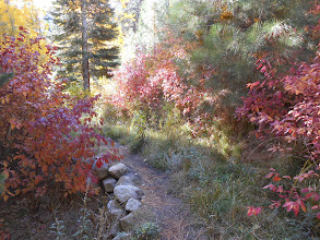 Photo: Fay-Luther/Jobs Peak Ranch Trail