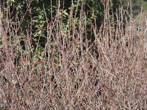 Photo: Poison oak abounds