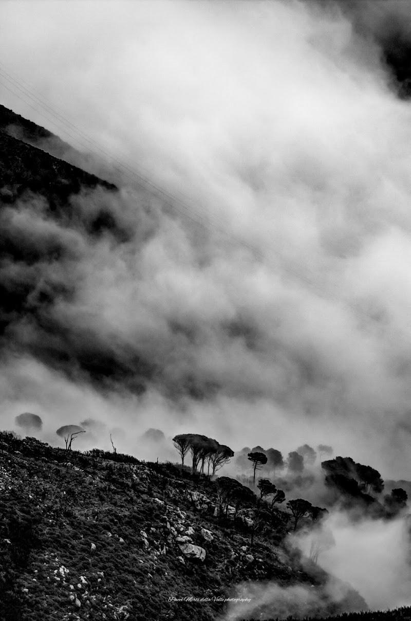 The mist di Michele Mirti della Valle photo's