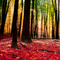 Autumn Landscape Wallpaper icon