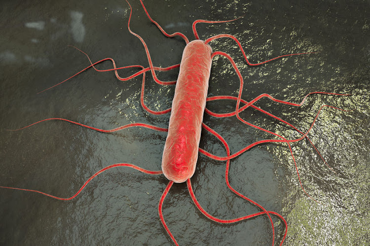 A 3D illustration of the bacterium Listeria monocytogenes, which causes listeriosis.