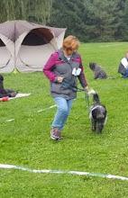 Photo: und Ellie hat am Samstag schön 'im Ring laufen' geübt - das schaut schon sehr profimäßig aus