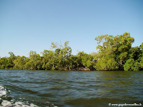 Photo: #002-Bolongs avec ses mangroves