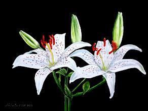 Photo: 422, Нетронина Наталья, Серия Цветочный калейдоскоп -Лилии белые, Масло, замша (живопись по бархату), 40х30см,