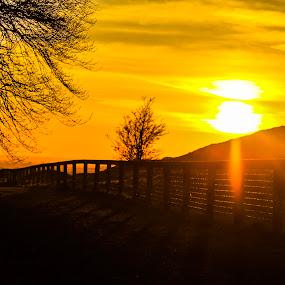 Hide and seek by Raymond Fitzgerald - Landscapes Sunsets & Sunrises ( cashel tipperary ireland, sunset, tree )