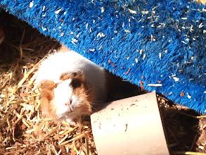 Photo: Neugierige Cookie!