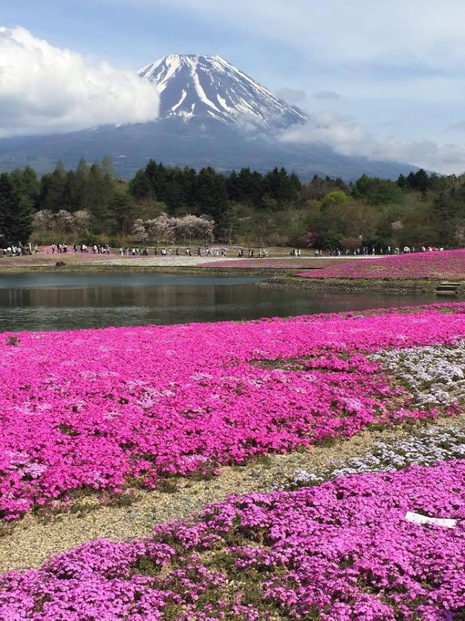 Mount Fuji - kawaguchiko  by Ching Wen - Landscapes Prairies, Meadows & Fields