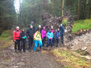 Photo: A and B walkers on Thos O'Neill's walk on Sunday, January 5th, 2014 stand in front of a tree blown over by recent storms.