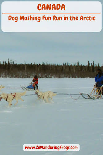 // Dog Mushing Fun Run in the Arctic Circle in Canada // #AdventureTravel with Ze Wandering Frogs
