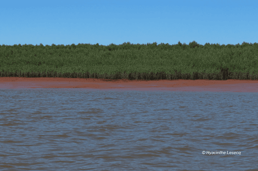 Betsiboka's mangroves