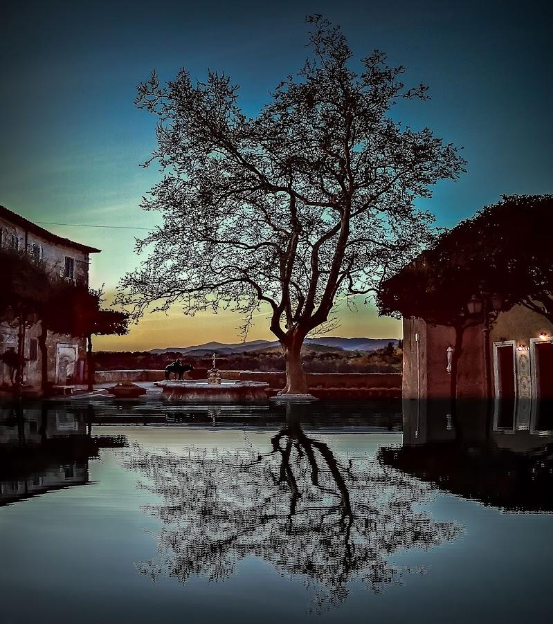 l'albero centenario della piazza di Pitigliano di massimo bertozzi