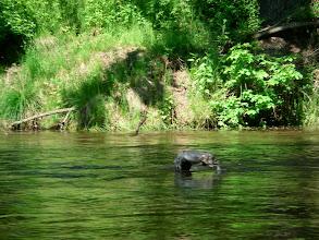 Photo: Zajączkowi nie udało się pokonać rzeki :(