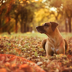 *** by Lukáš Lang - Animals - Dogs Portraits