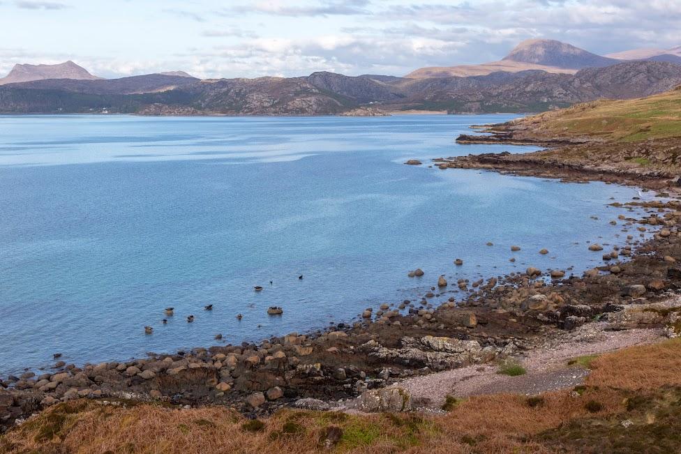 droga, foki, Szkocja