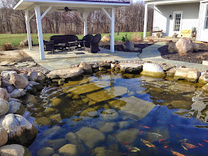 Photo: Pond Maintenance Monroe County, Rochester NY by Acorn Ponds & Waterfalls. Certified Aquascape Contractor Since 2004.  Check out our website www.acornponds.com and give us a call 585.442.6373.  Revisited this ecosystem #FishPond that we installed last year to start it up after a long winter. Water looking clear, no #Fish loss, plantings around the pond looking good and patio and walkway we installed looking great. Now ready for recreational use and summer parties.  Click here to learn more about Pond Maintenance Services: www.acornponds.com/pond-maintenance.html  Click here for more information about Debby's project: www.facebook.com/notes/acorn-landscaping-landscape-designlightingbackyard-water-gardens/aquascape-ecosystem-waterfall-pond-construction-pond-design-bluestone-patio-monr/607660449271081  To learn more about Pond Installations, Please click here: www.acornponds.com/ponds.html  Click here for a free Magazine all about Ponds and Water Features: http://flip.it/gsrNN  Find us on Houzz here: www.houzz.com/pro/acornlandscapedesign/acorn-landscaping-and-ponds-llc  Check out our photo albums on Pinterest here: www.pinterest.com/acornlandscape/  Sign up for your personal design consultation here: www.acornponds.com/contact-us.html  Acorn Ponds & Waterfalls  585.442.6373 www.acornponds.com