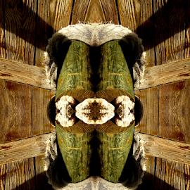 A Thing by Edward Gold - Digital Art Things ( digital photography, green, wood grain, black, wood, brown, digital art,  )