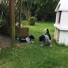 Photo: und ein Ausflug in Ellie's neues Zuhause - erst einmal den Garten erkunden