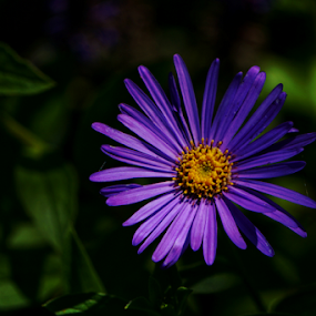 Center  by Todd Reynolds - Flowers Single Flower (  )