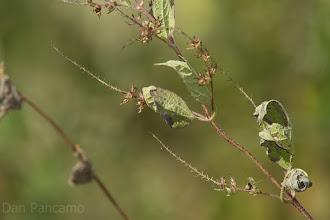 Photo: Where's the Birdie