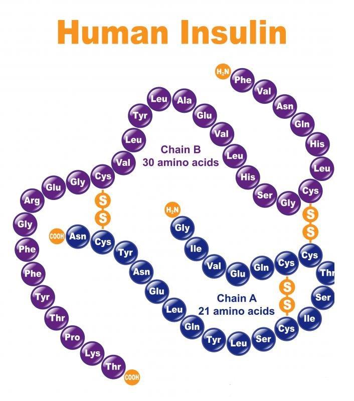 Hormon insulin