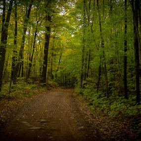 FALL TRAIL HEAD by Michael Haagen - Landscapes Forests ( fall colors, fall, leafs, color, tree,  )
