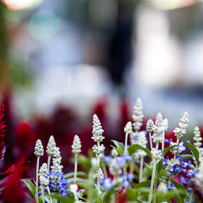 Town Hall Flowers by Brett Florence - Nature Up Close Flowers - 2011-2013 ( red, blue, white, bokeh, flower )