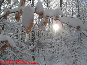 Photo: IMG_9914 autunno e inverno